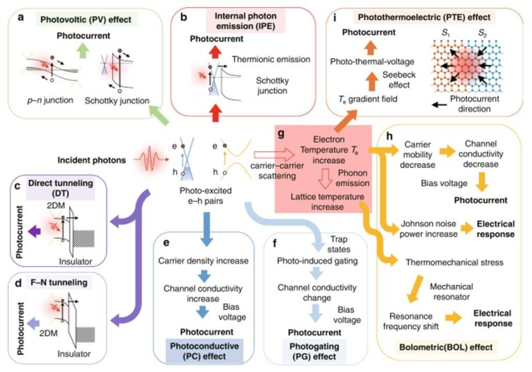 Summary of the working mechanisms of 2DM PDs